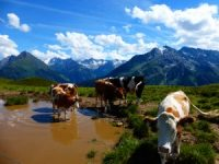 Tyrol - Austria & Munich itinerary