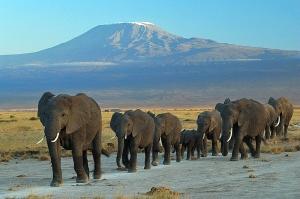 Amboseli National Park, Kenya